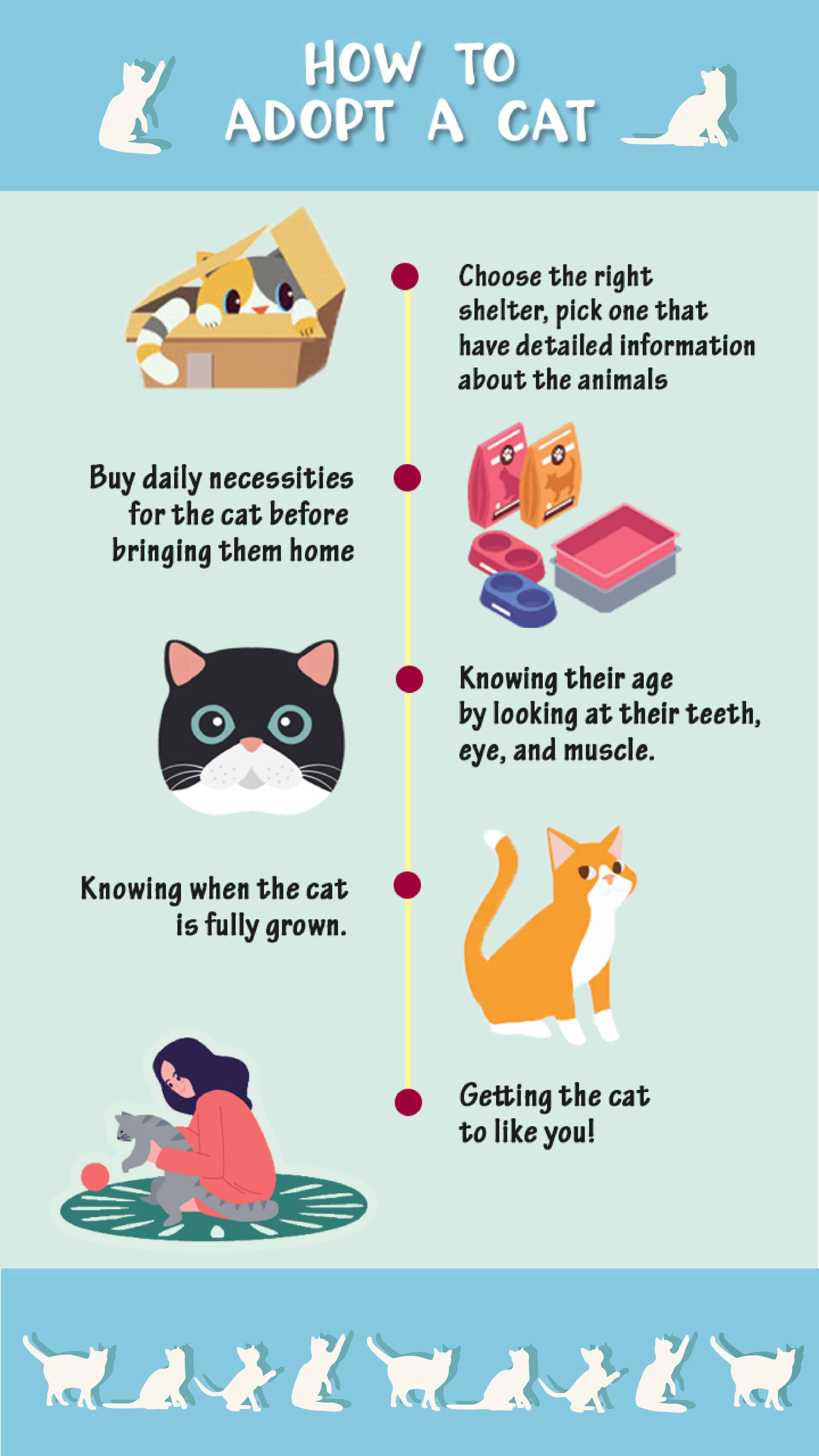 How to adopt a cat infographic