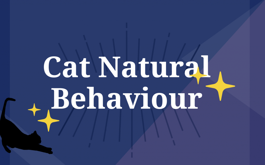 Cat Natural Behaviour