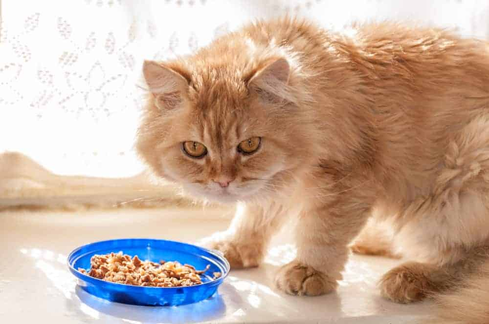 Healthy Homemade Cat Food